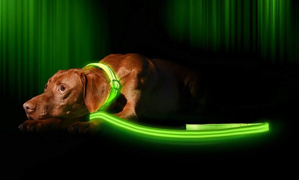 Illumiseen LED Dog Leash - USB Rechargeable - Available in 6 Colors & 2 Sizes - Makes Your Dog Visible, Safe & Seen 1