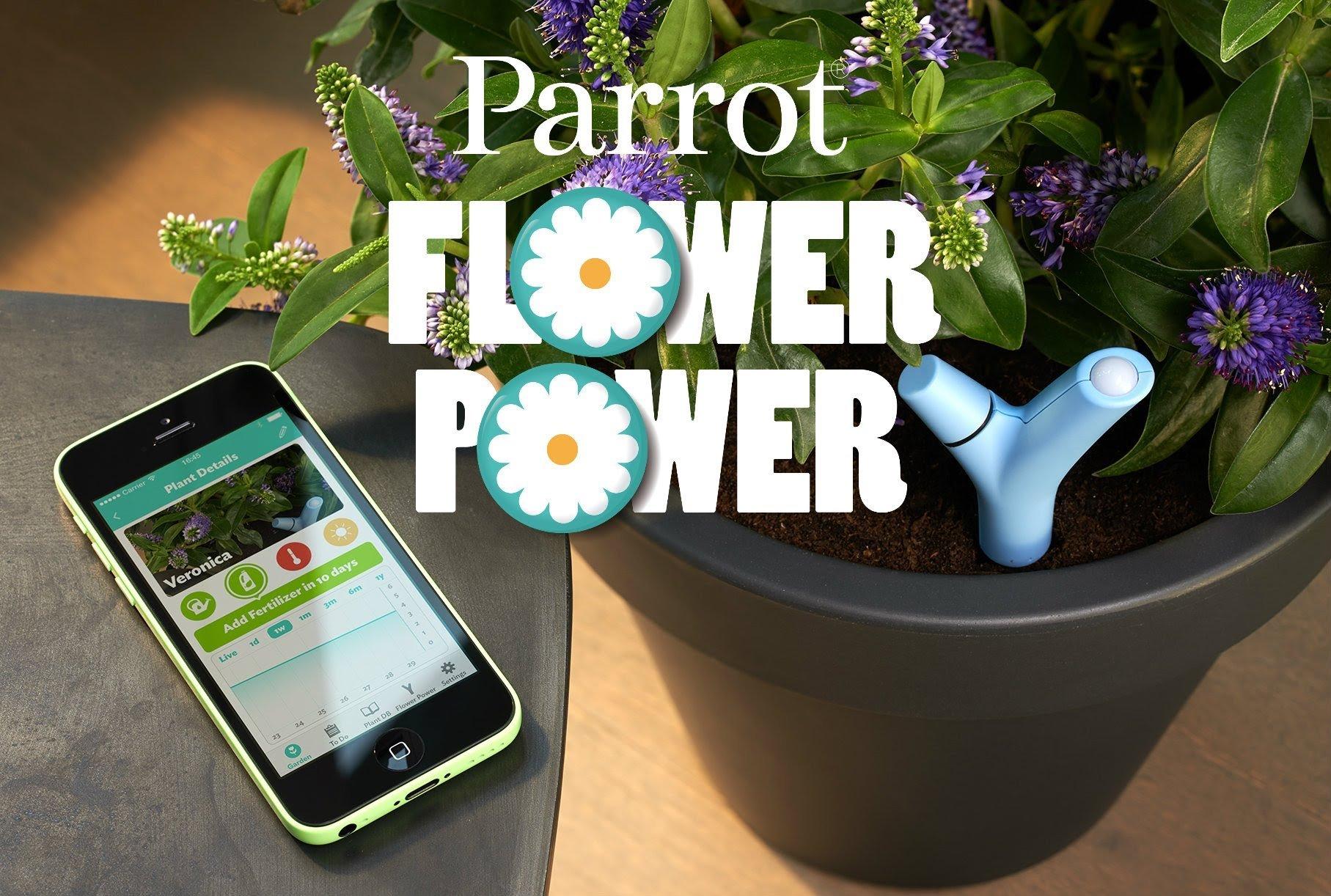 Parrot Flower 2