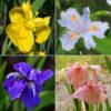 100pcs Mixture Colors Iris Flower Seeds Garden Balcony Perennial Herb Ornamental Plant 2