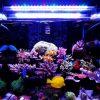 A251M 15W 25CM 5730 45SMD 1900LM LED Coral SPS LPS Aquarium Sea Reef Tank Light 6