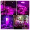 60 126 200 LED Plant Grow Light Bulb 360 Desk Chip Flexible Growth Lamp for Greenhouse Flower 3
